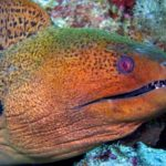 Les animaux les plus dangereux que vous pouvez trouver à la plage