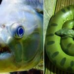 Les animaux effrayants que l'on trouve dans les fleuves et les rivières