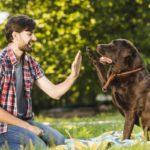 Les choses que les chiens peuvent faire et que vous ne saviez pas