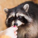 Les animaux de compagnie les plus insolites au monde
