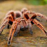 Top d'insectes les plus dangereux du monde
