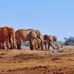 Les  animaux géants qui existent vraiment