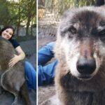 Top 10 des animaux géants qui existent vraiment !