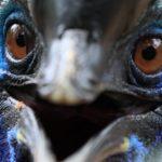 Les oiseaux les plus dangereux du monde