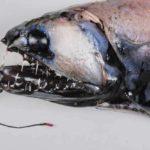 Les étranges créatures marines - Photos terrifiantes