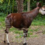 Les animaux incroyables que vous devez absolument connaître