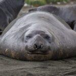 Les animaux les plus gros jamais vus