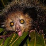 Les animaux étonnants et inhabituels, mais qui sont véritablement effrayants