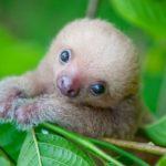 Voici à quoi ressemblent les animaux qui viennent de naître