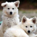 Un décret permet de vendre son animal à un laboratoire, 30 Millions d'amis s'insurge