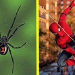 Trois enfants se font piquer par une araignée pour se transformer en spider-man