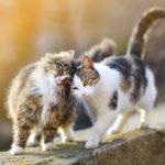 Besançon : 60 chats découverts morts dans un congélateur