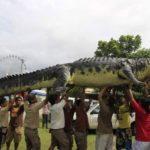 Les 6 crocodiles anormalement géants que la terre ait connus !