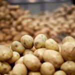 Pourquoi les fermiers détruisent des millions de pommes de terre ?