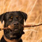 10 entraînements interdits de chiens