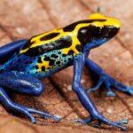 10 Créatures petites mais qui sont dangereuses