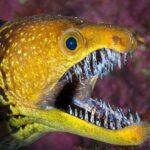 Des animaux avec les dents les plus terrifiantes