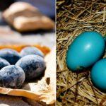 Les 10 œufs les plus uniques et les plus étranges du monde