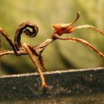 10 insectes incroyables que vous n'avez jamais vu