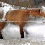 Les 10 animaux retrouvés complètement gelés sous la glace