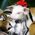 12 histoires touchantes d'entraide entre les animaux