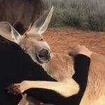15 animaux montrent leur gratitude envers leurs sauveurs