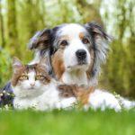 Une chienne devient mère de trois chatons après la perte de ses chiots