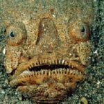 Les 10 créatures les plus dangereuses de l'océan