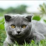 Une femme vend son chat qui exauce des vœux pour 127.000 dollars