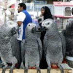 Après avoir insulté les visiteurs, 5 perroquets ont dû être retirés d'un zoo anglais