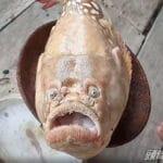 Un poisson «au visage humain» effraie des villageois thaïlandais