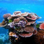 Découverte d'un récif corallien plus grand que la tour Eiffel au large de l'Australie