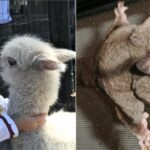 Les animaux exotiques que vous pouvez adopter