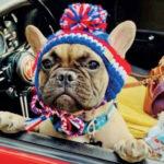 Pourquoi une ville des États-Unis a élu un chien français comme maire ?