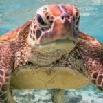 La photo d'une tortue faisant un doigt d'honneur remporte le « Comedy Wildlife Photography Awards »