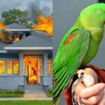 Insolite. Un perroquet sauve son propriétaire d'un grave incendie
