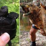 Les 7 tortues les plus étranges et les plus dangereuses du monde