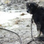 En Grèce, la maltraitance des animaux sera passible de 10 ans de prison