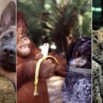 L'amitié entre animaux : la preuve que le chien est un parfait compagnon !