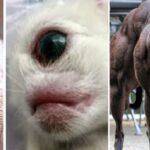 Ces animaux anormaux ont battu tous les records