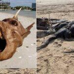 Voici 20 choses étranges retrouvées sur les plages