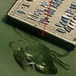 Les créatures des profondeurs capturées sur Google Earth