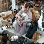 Une femme accueille 480 chats et dépense 6500 €/mois pour les nourrir