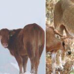 Histoires incroyables d'animaux qui se prennent pour d'autres