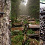 Les 15 preuves que la nature reprend toujours ses droits