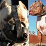 TOP 5 des races de chiens interdites dans le monde
