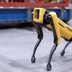 Spot, le chien-robot le plus agile au monde impressionne les vrais chiens