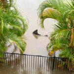 Australie : il trouve un requin dans son jardin après des inondations