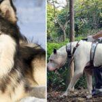Des chiens dangereux dont vous devriez avoir le plus peur