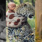 Histoires fascinantes d'enfants élevés par des animaux !